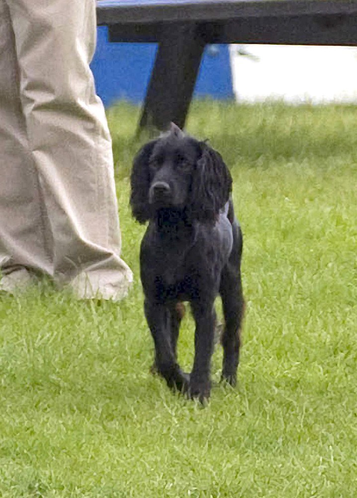 Prince William Photos Photos Will And Kate Bring The Puppy To Polo Zimbio