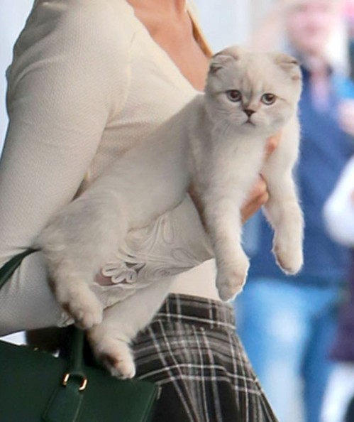 Taylor Swift Taylor Swift Photos Taylor Swift Steps Out With A Kitten Zimbio