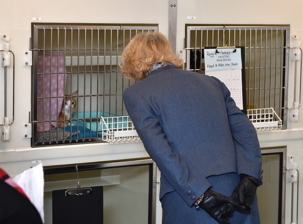 Camilla, Duchess of Cornwall meets a shy cat on February 26, 2015 in London, United Kingdom. HRH The Duchess of Cornwall was on a visit to Beaumont Sainsbury Animal Hospital, at the Royal Veterinary College in Camden, North London, where she met staff, students and patients. Her visit enabled her to see how the Animal Care Trust (of which she is Patron) funds state of the art animal care.
