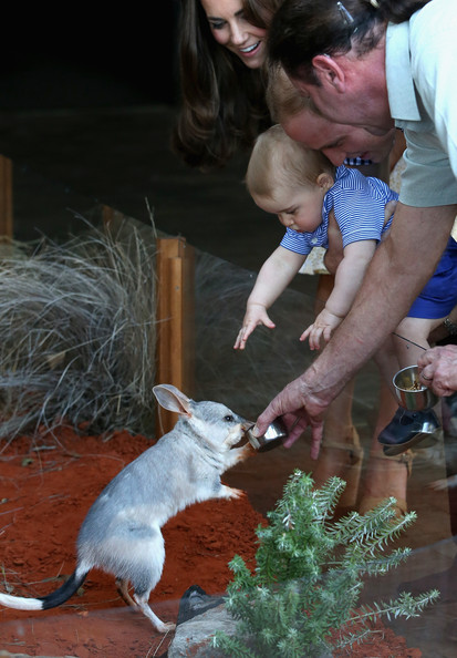 Catherine, Duchess of Cambridge holds Prince George of Cambridge as Prince William, Duke of Cambridge look whilst meeting a Bilby called George at Taronga Zoo on April 20, 2014 in Sydney, Australia. The Duke and Duchess of Cambridge are on a three-week tour of Australia and New Zealand, the first official trip overseas with their son, Prince George of Cambridge.