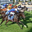 Fawkner Cox Plate Day