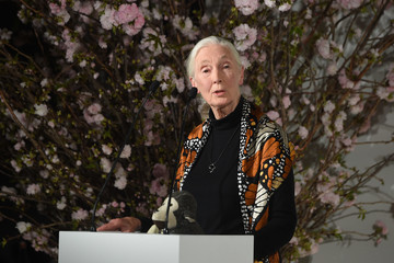 Jane Goodall 2017 DVF Awards
