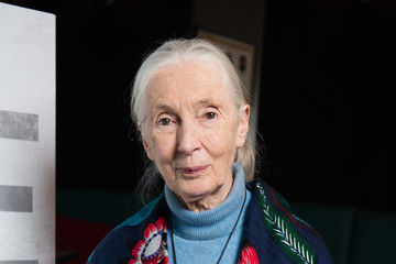 Jane Goodall Jane Screening With Dr Jane Goodall in Her Hometown of Bournemouth