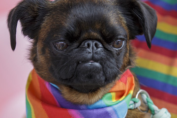 Pablo Aucklanders Attend Big Gay Out Pride Event