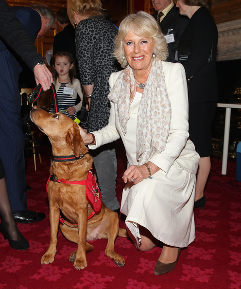 Camilla, Duchess of Cornwall poses with Medical Detection Dog Daisy during a demonstration by Medical Detection Dogs at St James's Palace on March 11, 2014 in London, England. 10 year old Daisy has a 94% cancer detection rate from the 6500 samples she has used smell to diagnose.