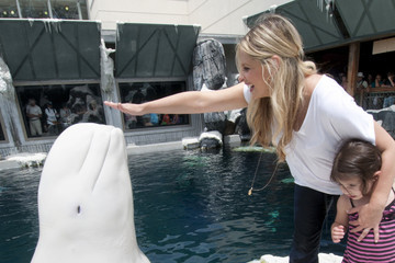 Sarah Michelle Gellar Celebs Hang Out at SeaWorld