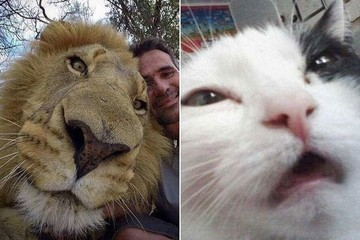 Animal Selfies That'll Make You Die