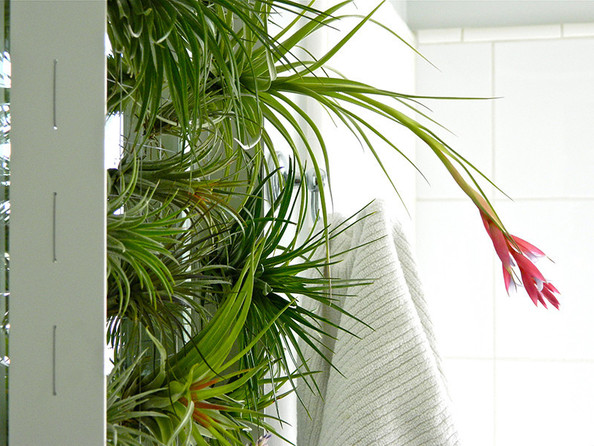 Airplant hangers | Lonny.com