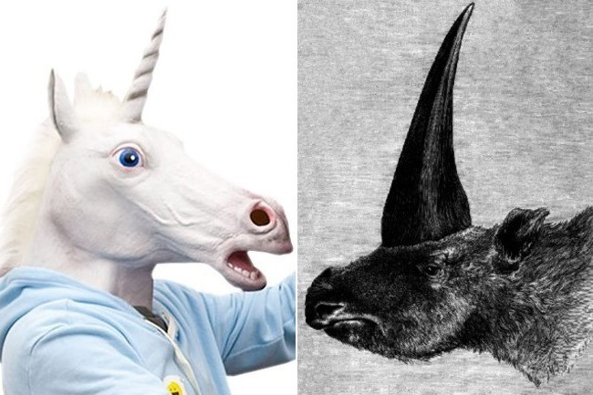 Yes Unicorns Were Real They Just Didn T Look Like Horses Going Viral Zimbio