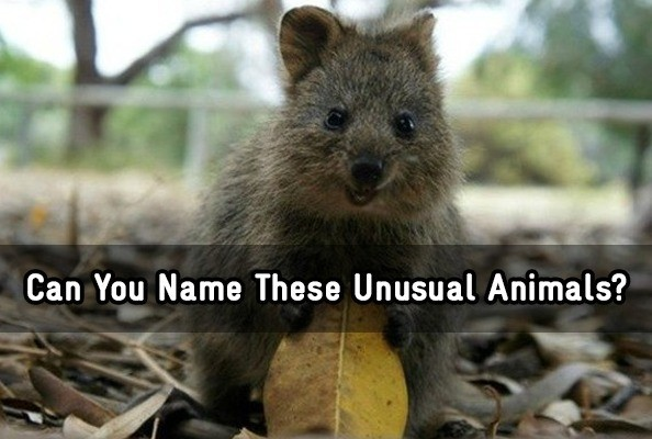 Can You Name These Unusual Animals? - Trivia Quiz - Zimbio