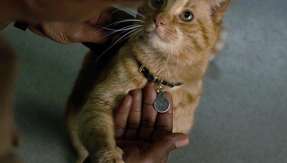 Goose The Cat Steals The Show In 'Captain Marvel,' Etches Name In Feline Movie History