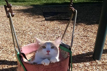 19 Animals Who Would Rather Be Humans