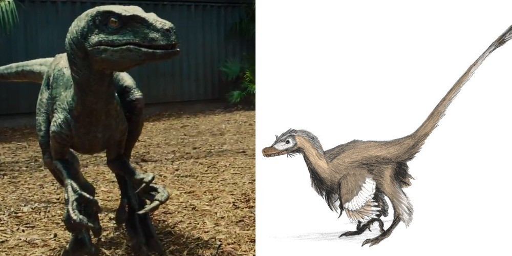 The Disappointing Truth About the 'Jurassic' Raptors & 3 Other Dinos