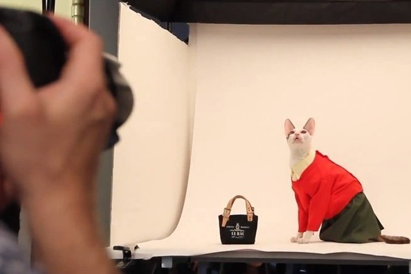 Behind the Scenes at United Bamboo's Cat Calendar Shoot [VIDEO]
