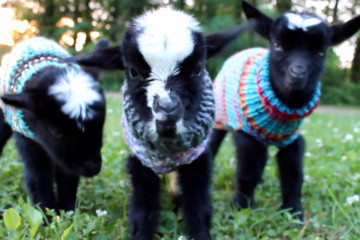 Here's Proof That Tiny Animals in Tiny Sweaters Make Everything Better