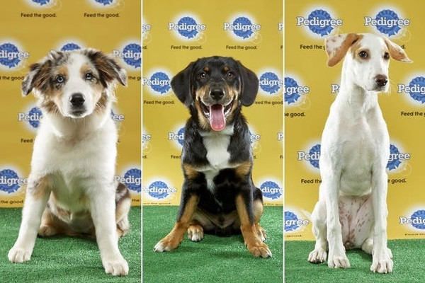All the Adorable 2017 Puppy Bowl Puppies
