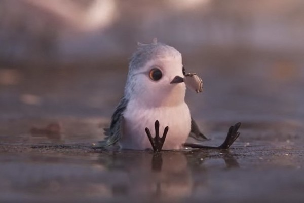 Allow Pixar's Adorable 'Piper' Short Help You to Overcome Your Election Fears