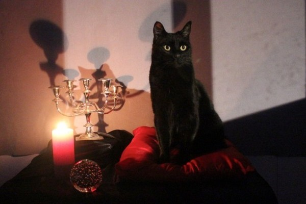 Hail Salem, The Chilling Adventures Of Sabrina Has A New Familiar