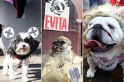 Best Dressed Pooches at the 2012 NYC Halloween Dog Parade