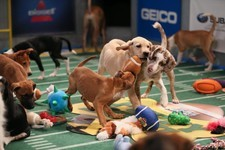 Determining the Most and Least Likely MVP Candidates for the 2015 Puppy Bowl