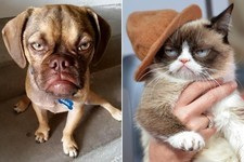 Brace Yourself, There's a New Grumpy Animal Taking Over the Internet