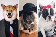 #FF Five Fashionable Dogs on Instagram
