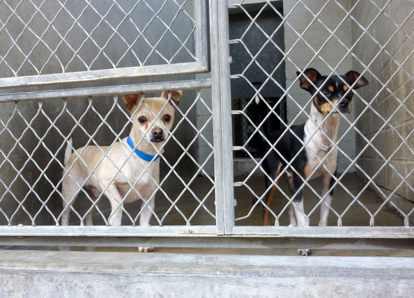 animals at a shelter   pictures   zimbio