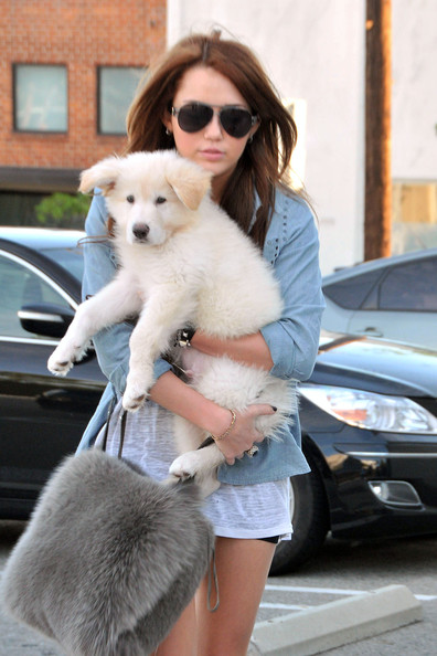 Miley Cyrus Miley Cyrus holds onto her fluffy white puppy while doing a bit of shopping in West Hollywood. Miley was wearing a pair of short shorts, leather boots and was carrying a furry purse to which matched her dog.